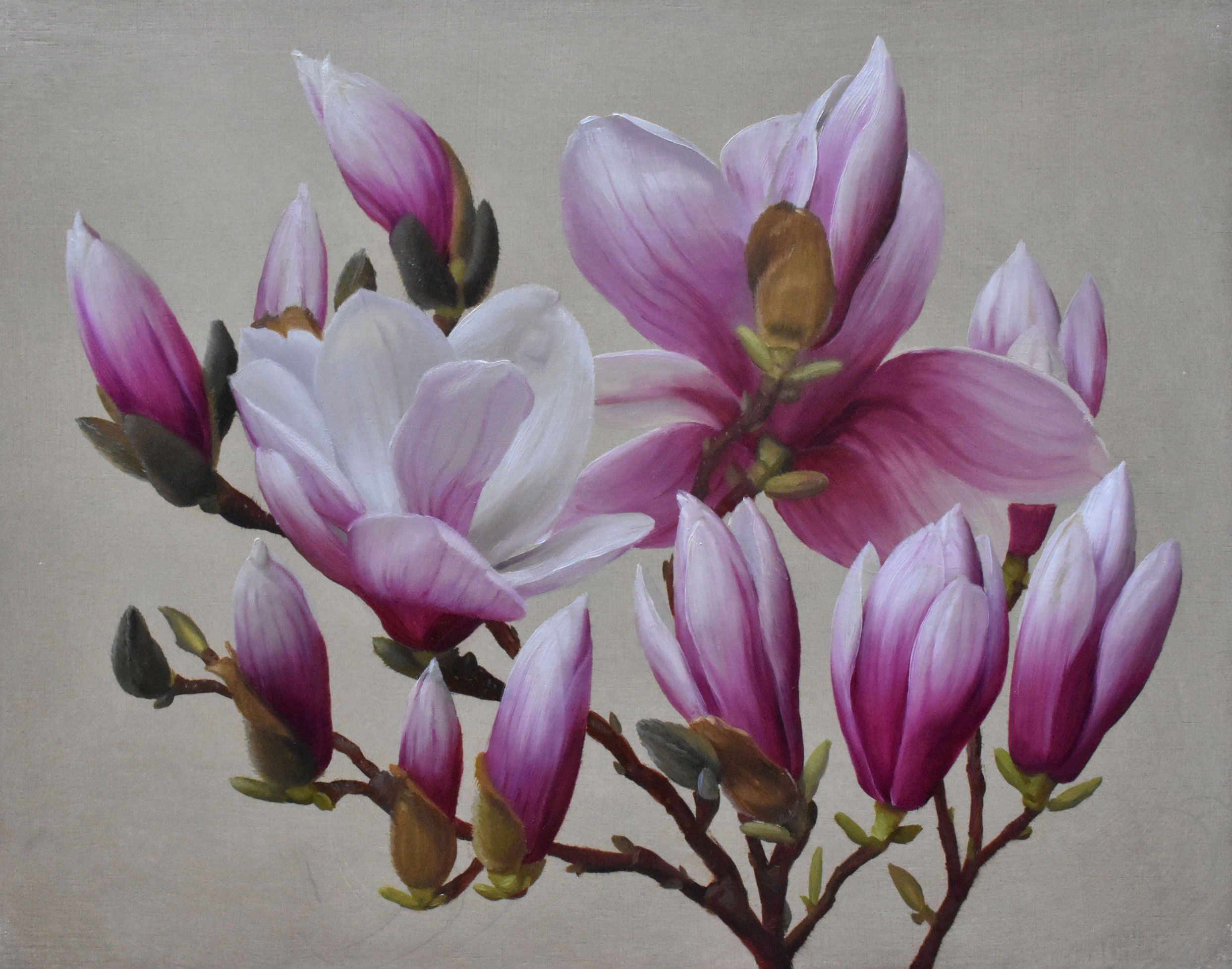 Johnston,-Brendan,-Blooming-Magnolias-III,-11__x14__,-Oil-on-Panel,-$1,400,